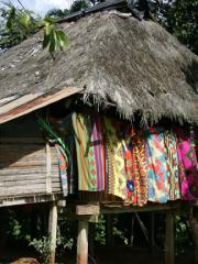 De la Jungle tropicale aux Caraïbes