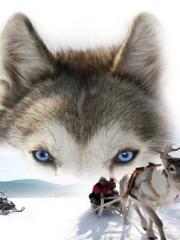 Nouvel an en Laponie