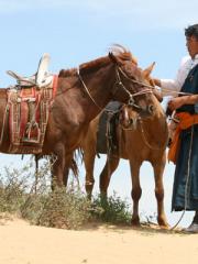 Chevauchée et découverte de la Mongolie